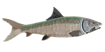 """Boney: the BONEFISH. One of the three species that can disturb fly fishermen's dreams. (The Tarpon and Permit are the other two. This fish is skittish on the side of cautious as a hummingbird is around a sleeping cat. They're light tackle fish that are explosive when caught. Their power for their size is overwhelming and addictive. (48"""" W x 16"""" H – 7 lbs.)"""